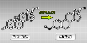 aromatase